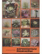 Káposztafélék termesztése - Dr. Szalva Péter