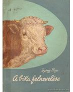 A bika felnevelése - György Károly, Pajzs Gyula