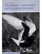Weissbart- und Weissflügelseeschwalbe - Kapocsy György