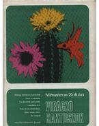 Virágzó kaktuszok - Mészáros Zoltán