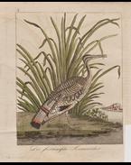 Rézmetszetűillusztrációk gyűjteménye, részben kézzel színezve (1814–1816)