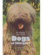Dogs of Hungary - Sárkány Pál, Ócsag Imre