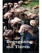 Begegnung mit Tieren - Több német szerző