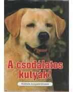 A csodálatos kutyák! - Veress István