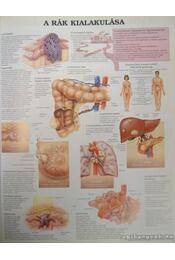 Betegségekről képekben - Régikönyvek