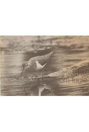 Om Fugle - Régikönyvek