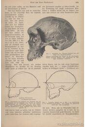 Kosmos 1925. 1-12. - Régikönyvek