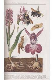 Leitfaden der Pflanzenkunde - Schmeil, Otto - Régikönyvek